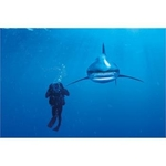 PUZZLE 1000 EL NATIONAL GEOGRAPHIC WHITETIP SHARK BPZ